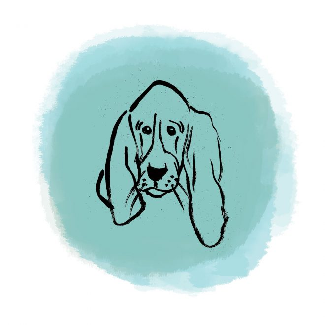 Basset Hound illustration for rescue organization