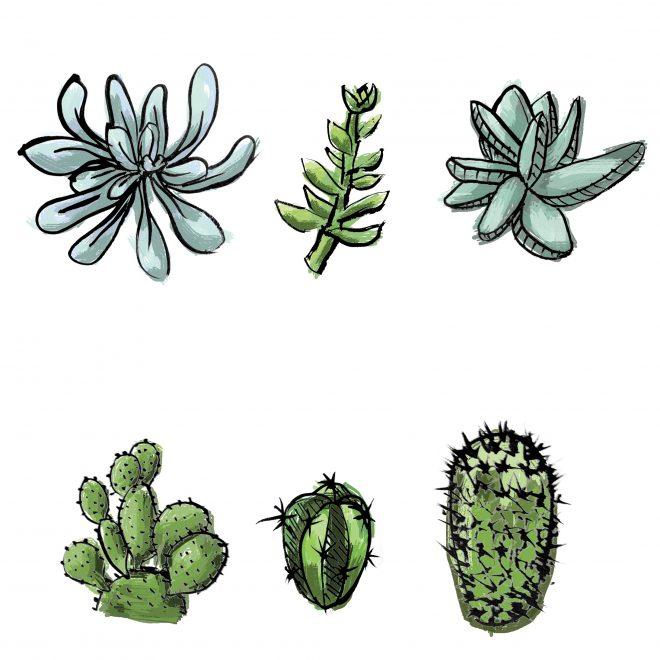 Succulents and cacti